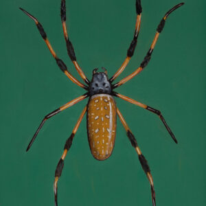 painting of banana spider