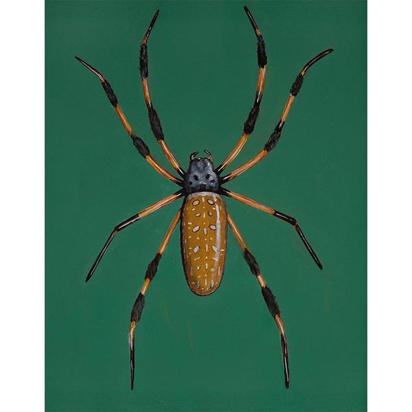 """Banana Spider"" by April VanDeGrift, 10x8"""